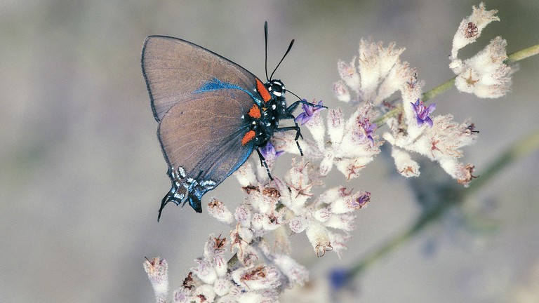 Butterfly_030521A