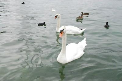 Geneva Lake - DSC 0196