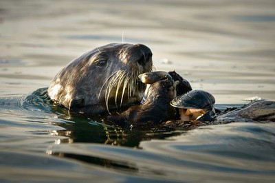 Dinner_Time_Elkhorn_Slough_082014