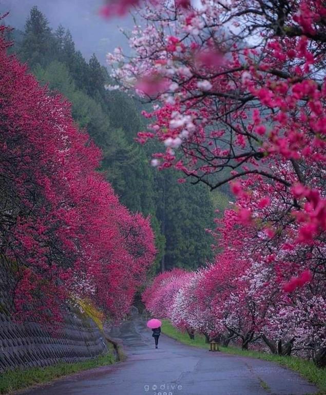 Japan_022821A